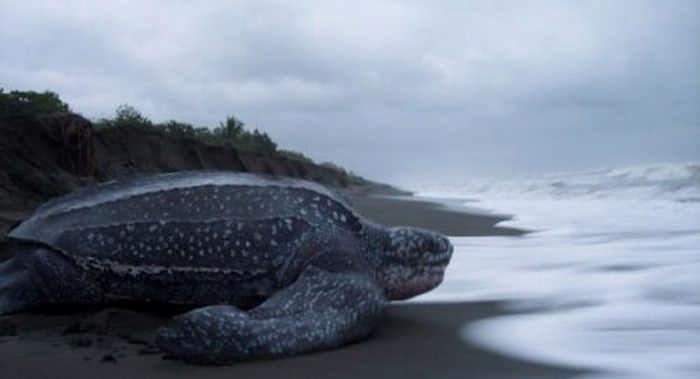 10 самых больших животных