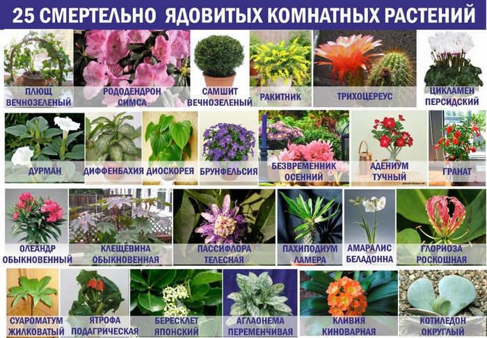 Семейства цветов, которые нельзя держать дома