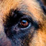 10 самых умных собак в мире - Секреты вдохновения
