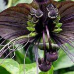 Десять необычных цветов
