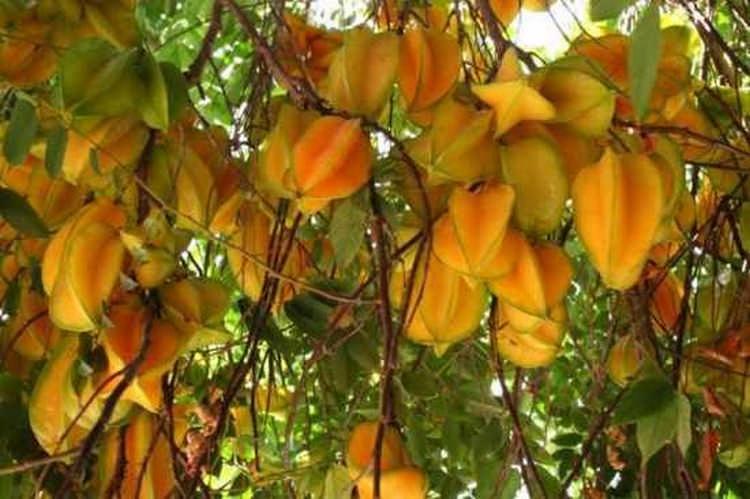 Топ 10 самых необычных фруктов, о которых вы никогда не слышали