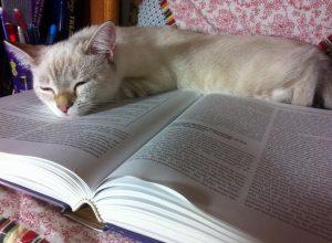 Смешная подборка фотографий: коты, которых быстро настиг сон