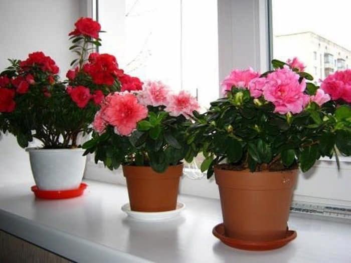 15 комнатных цветов, которые нельзя держать дома