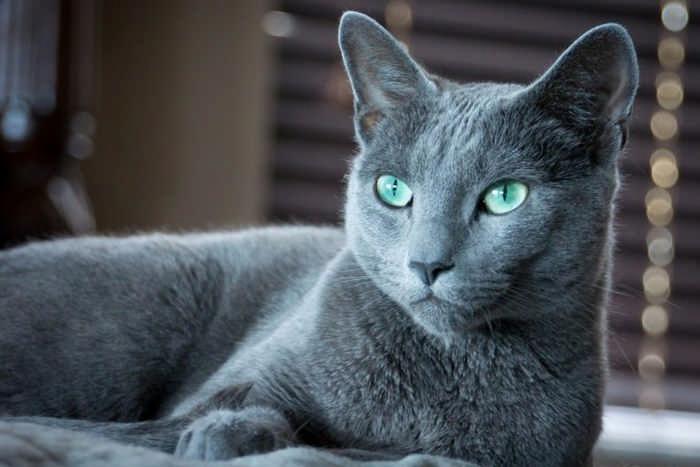 Топ 10 самых дорогих и редких кошек