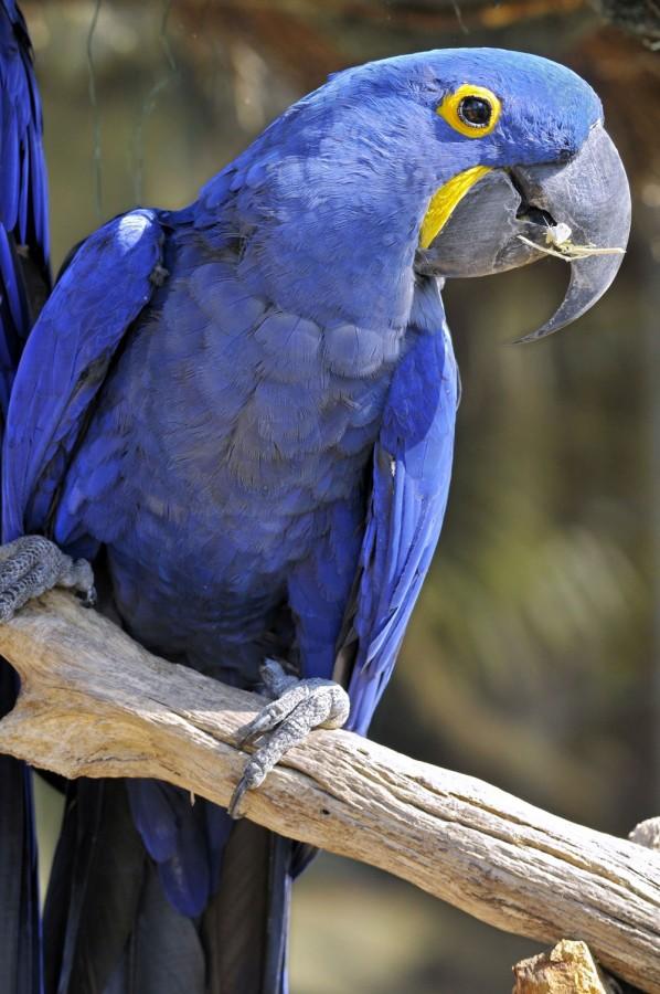 10 стран мира, где можно встретить редких животных