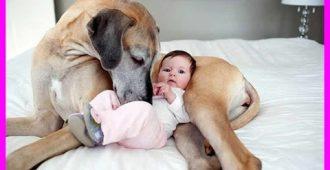 Дети и животные: как собаки любят и нянчат детей