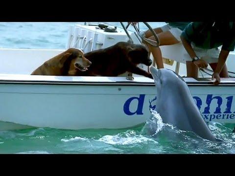 eto neveroyatnoe chudo delfin po