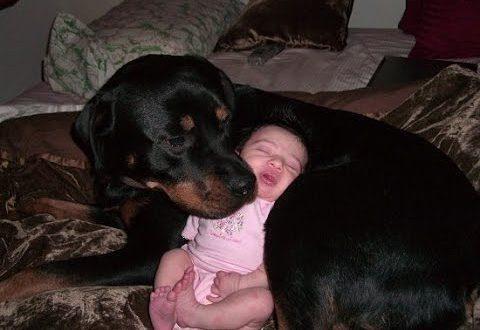 Идеальная собака-нянька для детей