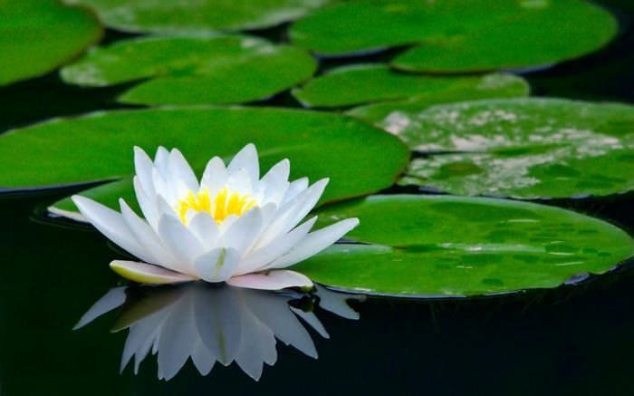 10 самых красивых цветов
