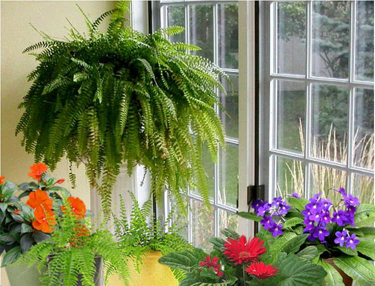 Десять самых полезных растений для дома