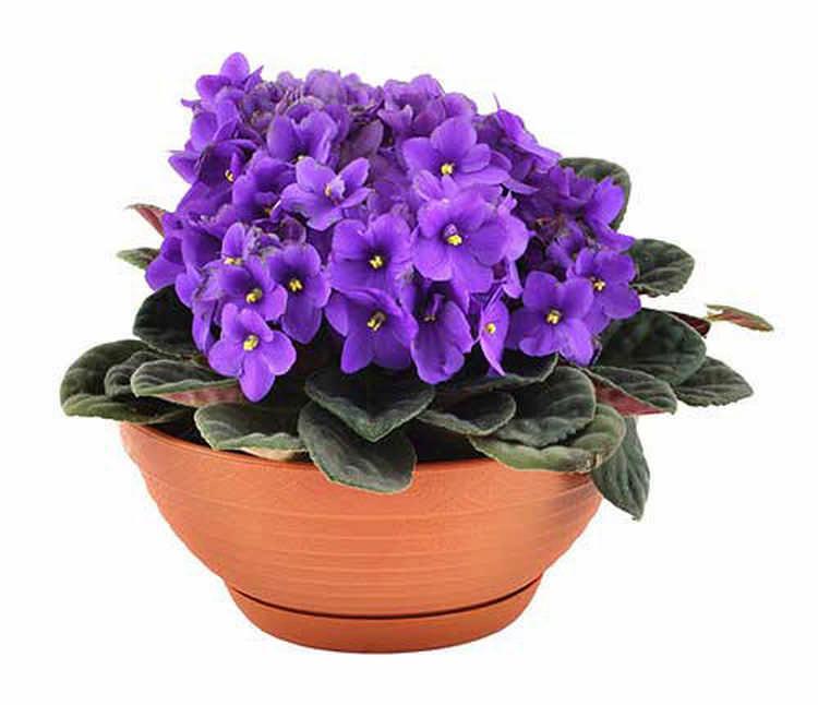 Какие цветы можно поставить в детской комнате