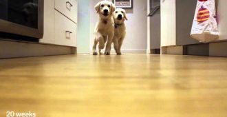 Хозяин 9 месяцев снимал, как его щенки бегут обедать. Вот что получилось