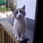 Кот просится домой - Секреты вдохновения