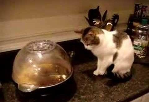 Кот решил посмотреть, как готовиться попкорн