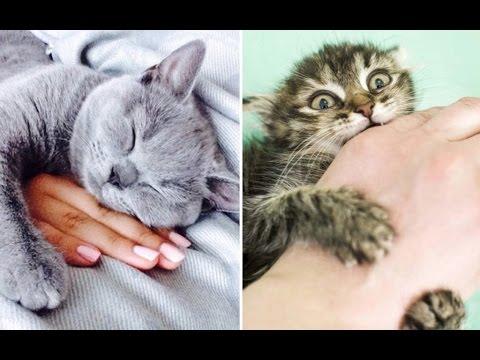 видео про котов