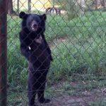 Медведь, который стал авторитетом - Секреты вдохновения