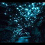 Пещера Светлячков — самое привлекательное место в Новой Зеландии