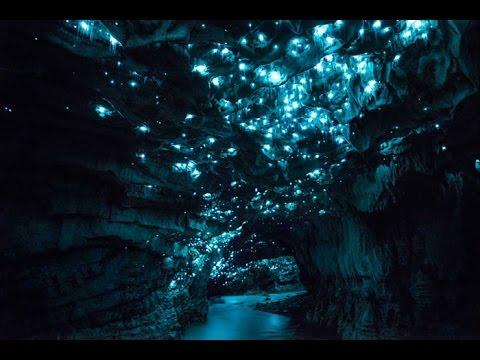 Самое привлекательное место в Новой Зеландии - пещера светлячков