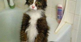 Почему вам стоит завести кошку