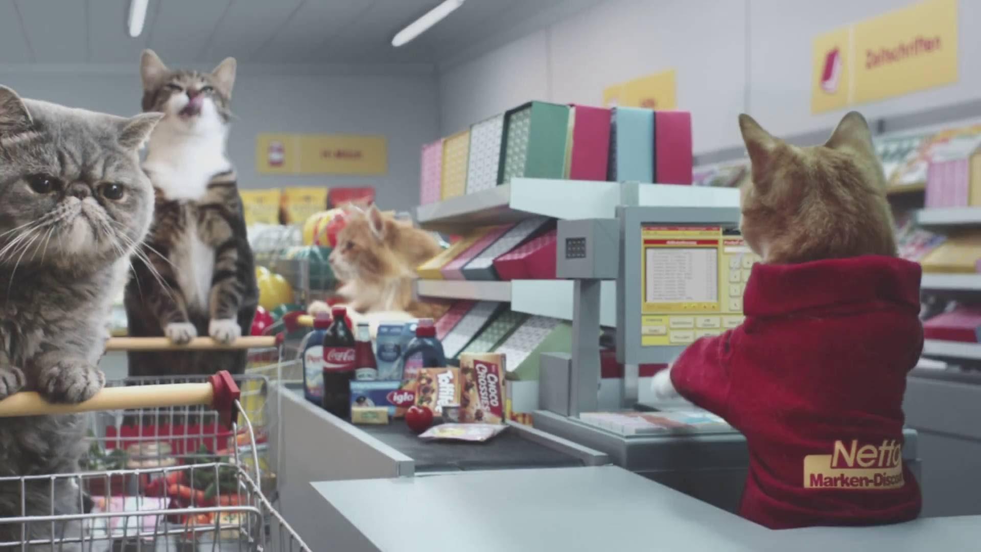 Реклама, в которой все роли исполнили кошки