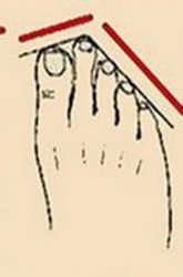 Тест по пальцам ног: узнайте, кто хозяин в доме