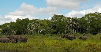 Слон помешал крокодилу утащить слоненка за хобот - Секреты вдохновения