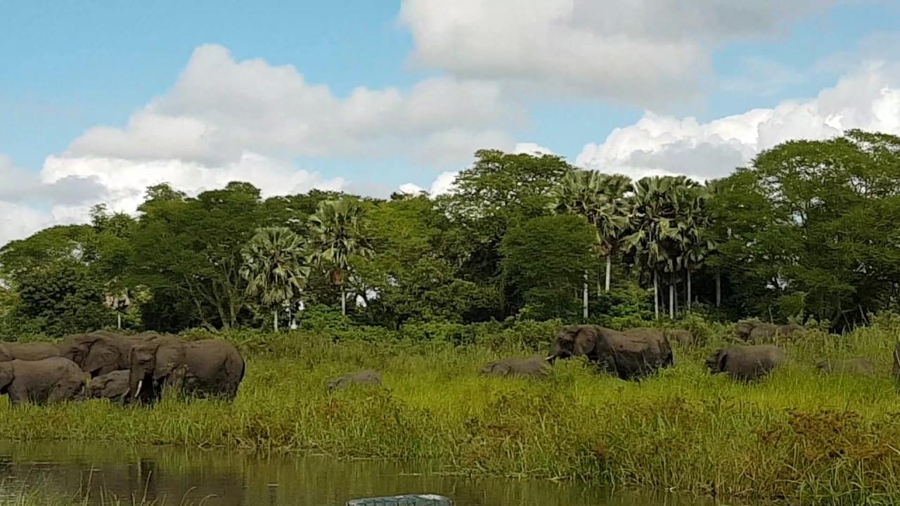 slon pomeshal krokodilu utashhit
