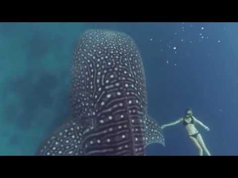 Танец русалки с китом