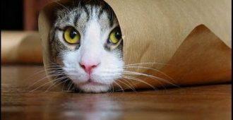 Топ-10 смешных видео про котов - Секреты вдохновения