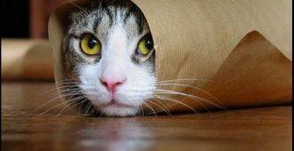 Топ-10 смешных видео про котов