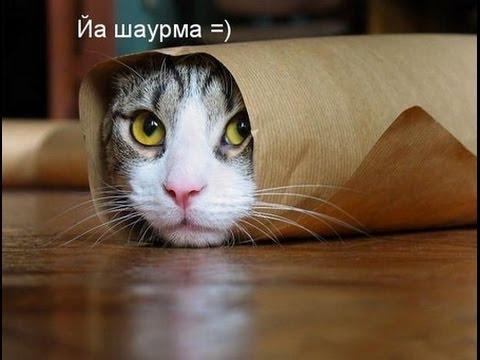 top smeshnyh video pro kotov