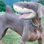 Топ-10 животных гибридов - Секреты вдохновения