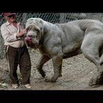 Топ-7 животных, которые реально существуют - Секреты вдохновения