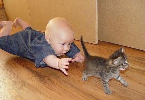 Топ лучшие видео про детей и кошек - Секреты вдохновения