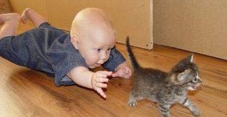 Топ лучшие видео про детей и кошек