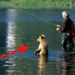Топ неожиданных встреч с дикими животными - Секреты вдохновения
