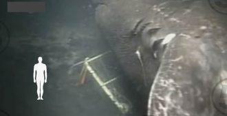 Топ невероятных морских животных - Секреты вдохновения