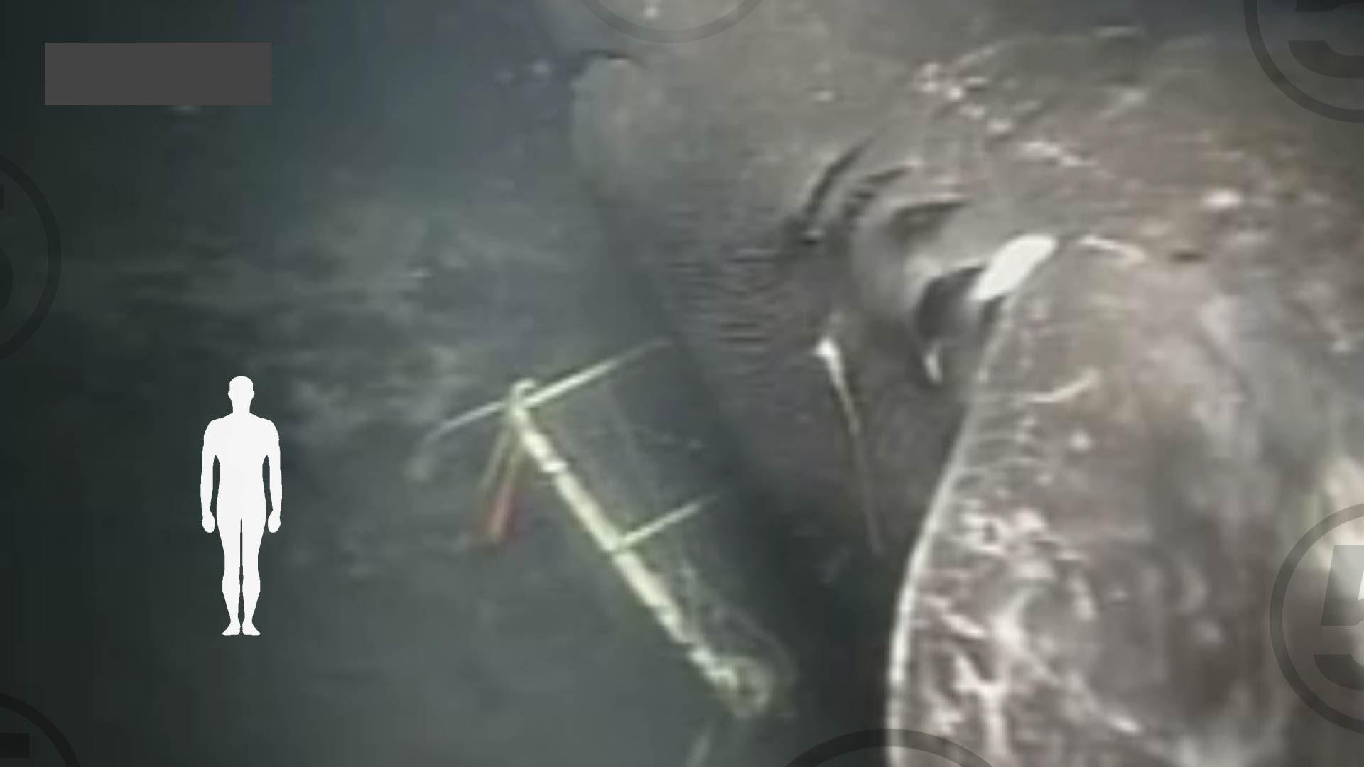 top neveroyatnyh morskih zhivotn