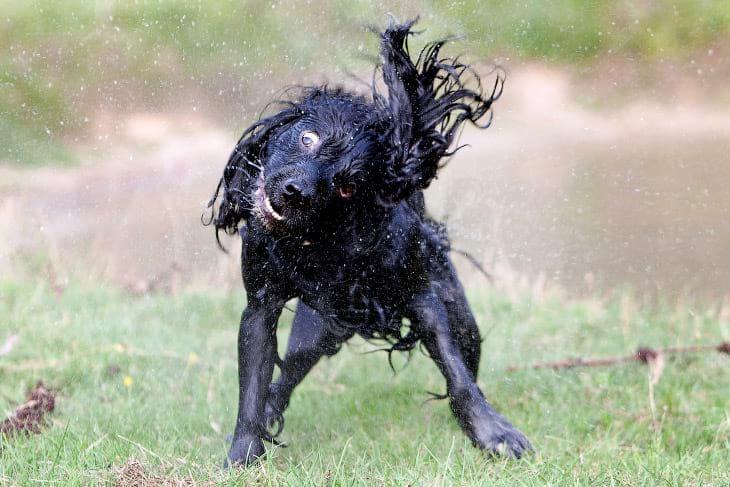 как выглядят бегущие собаки