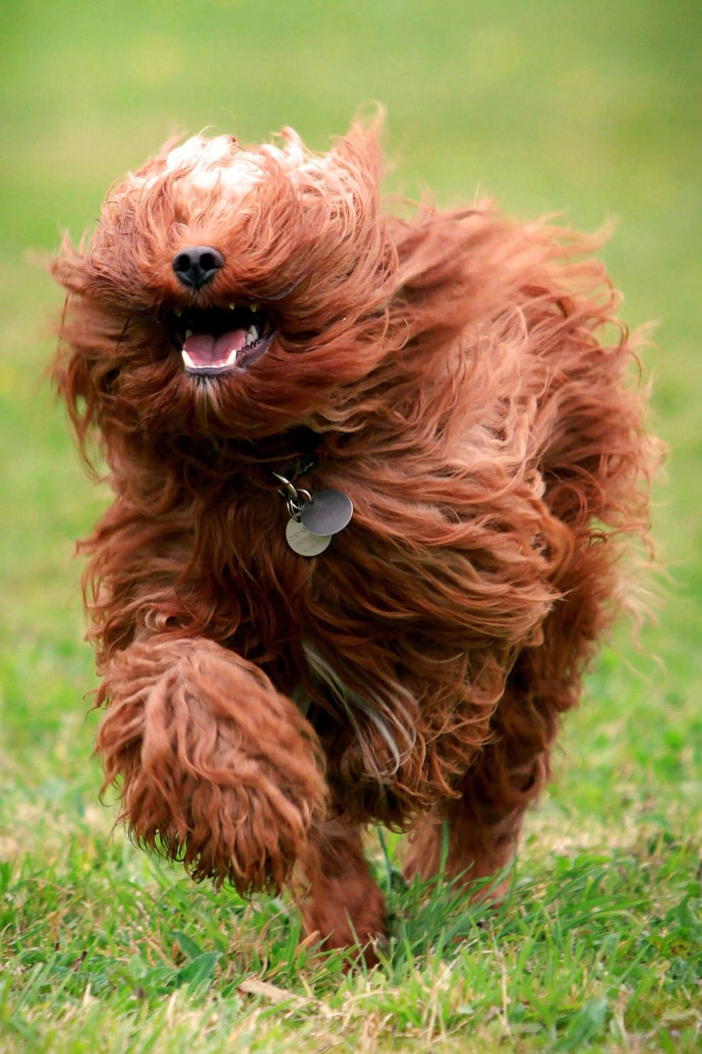 Как выглядят бегущие собаки?