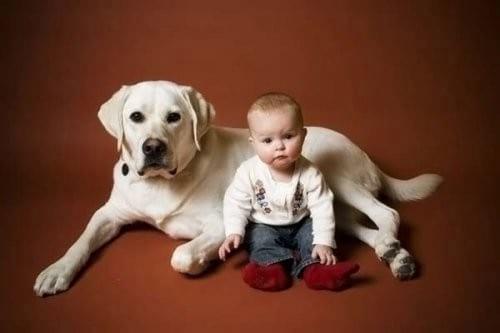 Собака — лучшая нянька для ребенка!