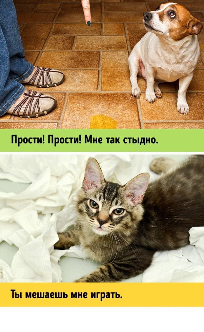 12 неоспоримых доказательств того, что коты и собаки из разных измерений