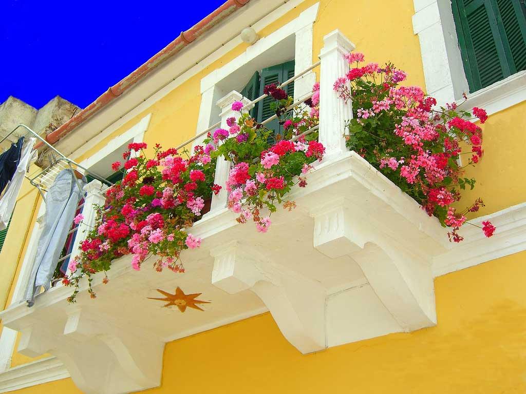 wsi imageoptim cvety na balkone