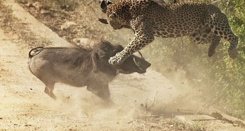 битвы животных