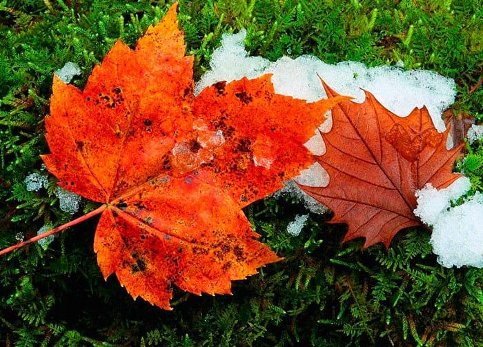 Народные приметы ноября о погоде, природе, свадьбе