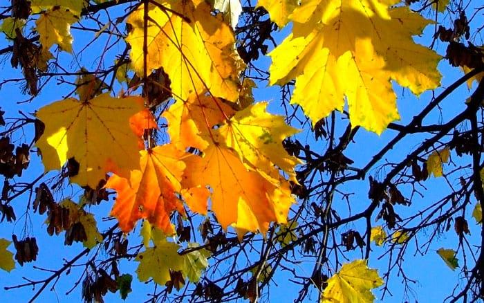 Народные приметы на ноябрь о природе