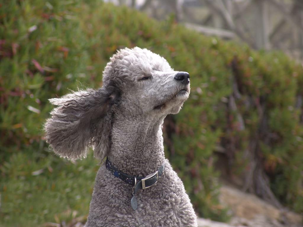 топ 10 лучших собак для детей