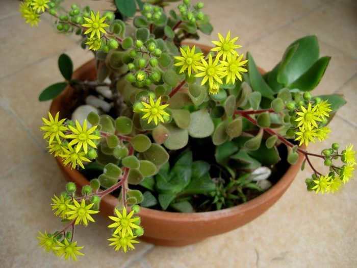 Комнатные растения, которые приносят удачу, деньги и счастье в дом