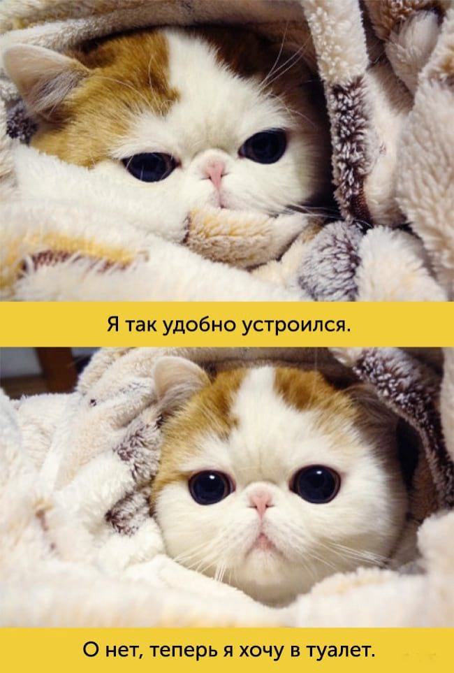15 самых эмоциональных котиков
