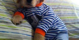 Интернет захватили щенки в пижамах